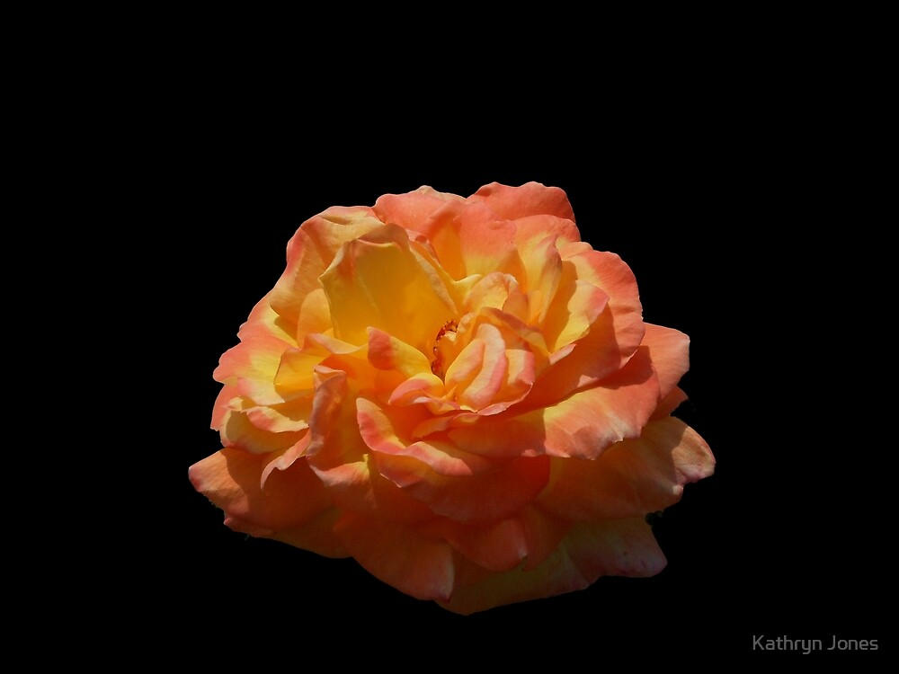 Glowing Orange Rose by Kathryn Jones