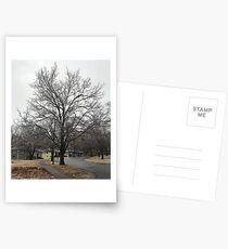 Frozen tree Postcards