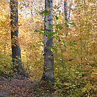 Golden Wisconsin Woods by Kathleen Brant