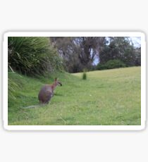 Wallaby Lanscape Sticker