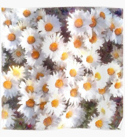 Spring Daisy Wildflower Watercolor Poster