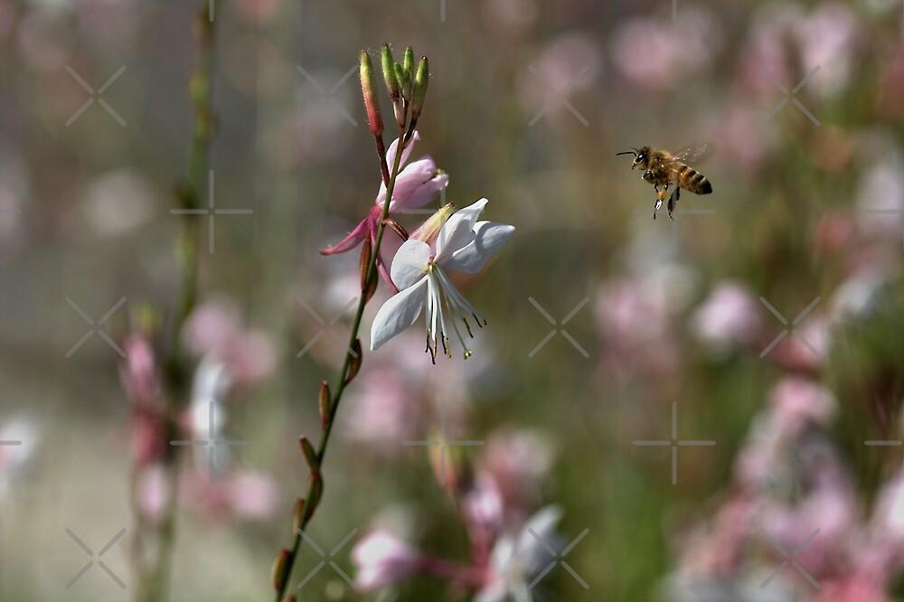 Bee FREE by Joy Watson