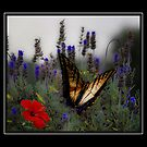 butterfly among the blue flowers by ezdrifter