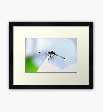 Perched Blue Dasher Dragon Framed Print