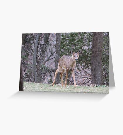 Okauchee Lake Deer Greeting Card