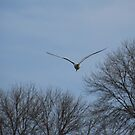 Seagull Over Trees by Thomas Murphy