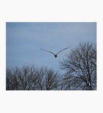 Seagull Over Trees Photographic Print