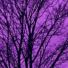 Ultra Violet skies by chihuahuashower