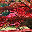 Westonbirt, Autumn Leaves by John Dalkin