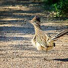 Road Runner by George Lenz