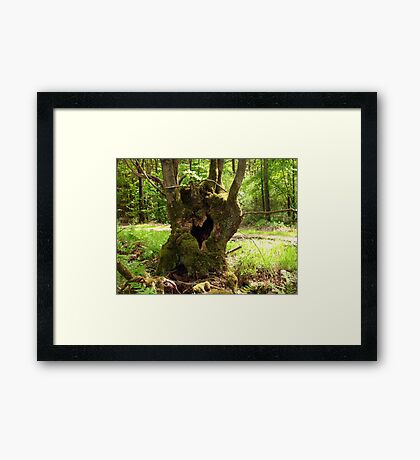 The Heart of a Tree Framed Print