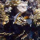 Dancing Threadfin Butterflyfish by hurmerinta