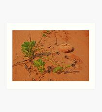 James Price Point, Broome,  Western Australia Art Print