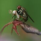 insects by liak