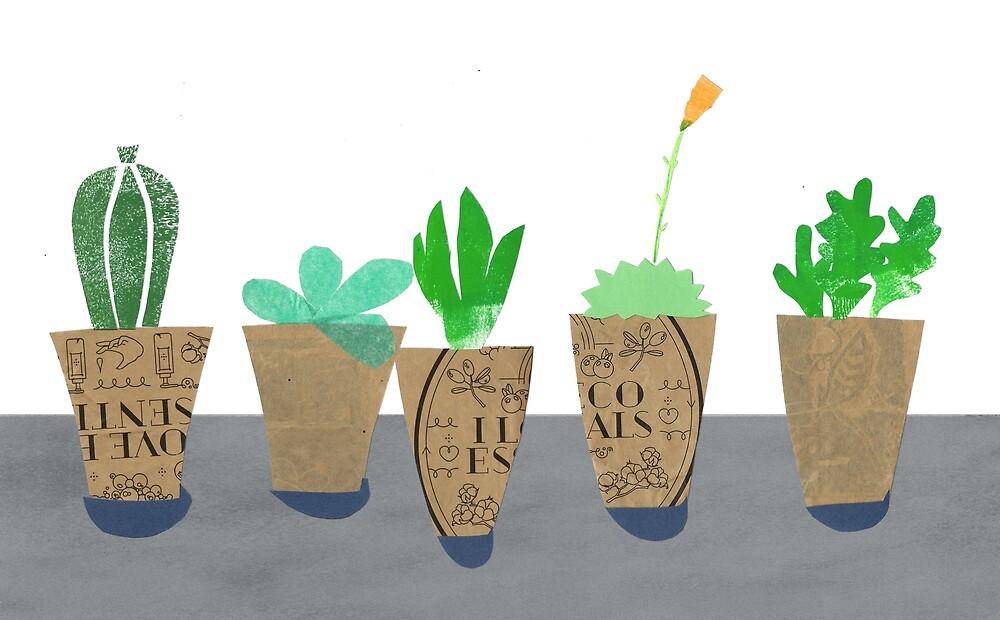 « La collection de succulents » par Mireille  Marchand