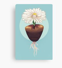 The Humble & Beautiful Lithops Plant Canvas Print