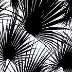 Black and White Tropical Leaves by Dominiquevari