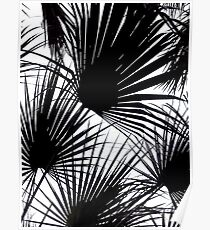 Black and White Tropical Leaves Poster