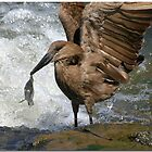 Hammerkop with lunch by CraigSev