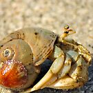Hermit Crab by Kim McClain Gregal