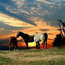 Mustang Sunset by Samantha Dean