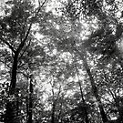 Trees Black&White by TLWhite