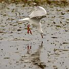 Gull Fishing 01 by Werner Padarin