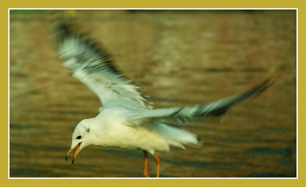 in flight by Dr. Harmeet Singh