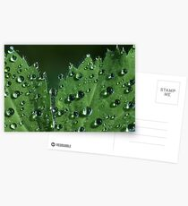 Clear Drops Postcards