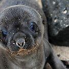 Cute as a Button by Sue  Cullumber