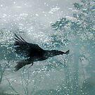 Eternal Flight by Emma  Wertheim