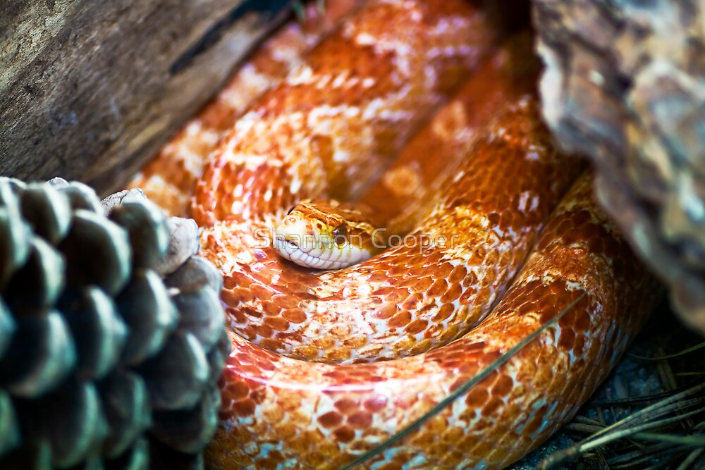 Coiled & Comfy by Shannon Beauford