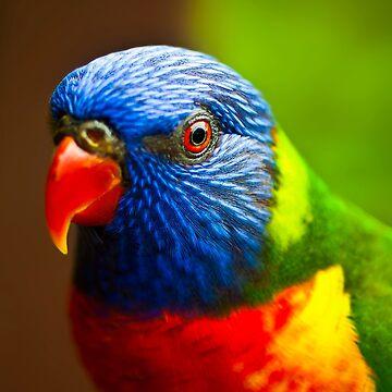 Rainbow Lorikeet V Detail by GreenEyedHarpy