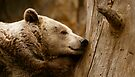 Sleeping Brown Bear by Louise Fahy