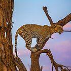 Kenya. Samburu National Reserve. Sunset. Leopard on a Tree. by vadim19