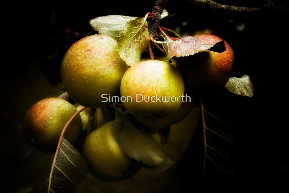 Apples in the garden by Simon Duckworth