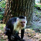 Capuchin by Anne-Marie Bokslag