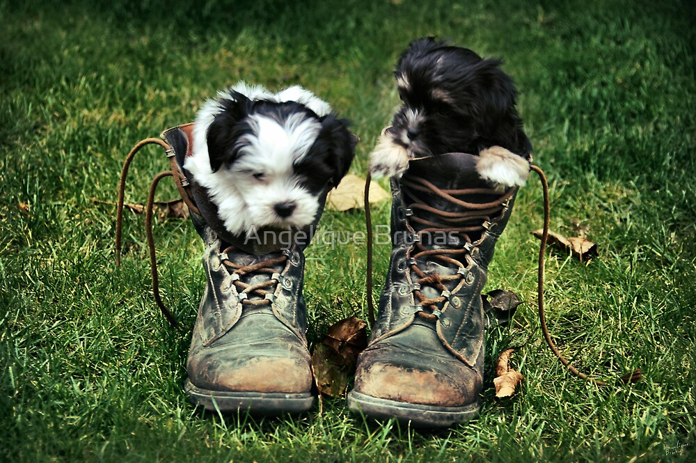Fluffy boots by Angelique Brunas