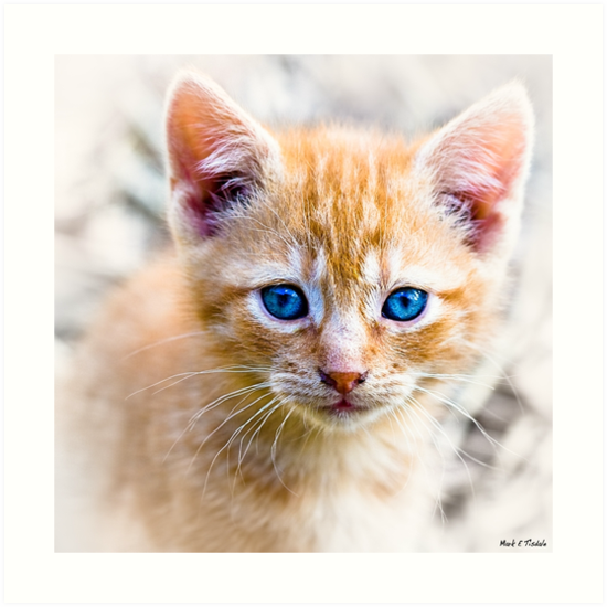 Innocence - Eyes of a Kitten by Mark Tisdale