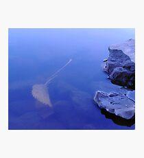 Float Leaf Fotodruck