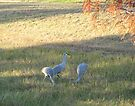 Sand Hill Cranes by ValeriesGallery