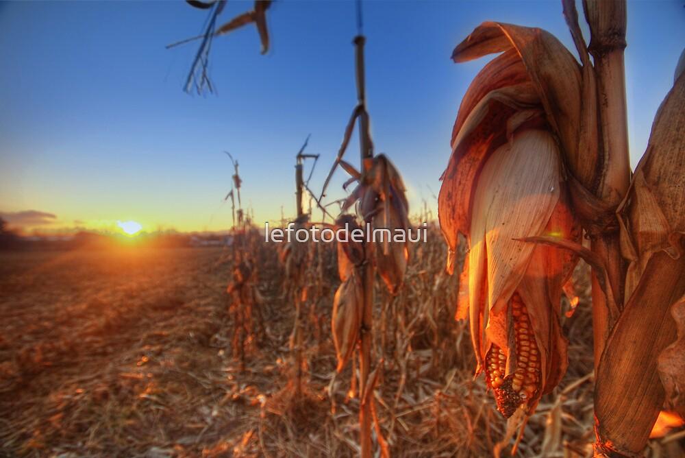 Che ne sai tu di un campo di grano... by lefotodelmaui