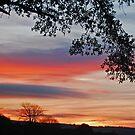 sunset silhouette by jaffa