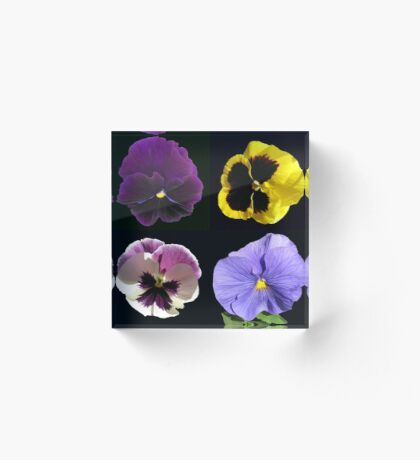 Stiefmütterchen-Collage - schwarzer Hintergrund Acrylblock