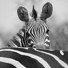 Zebra in Schwarz und Weiß von Carole-Anne