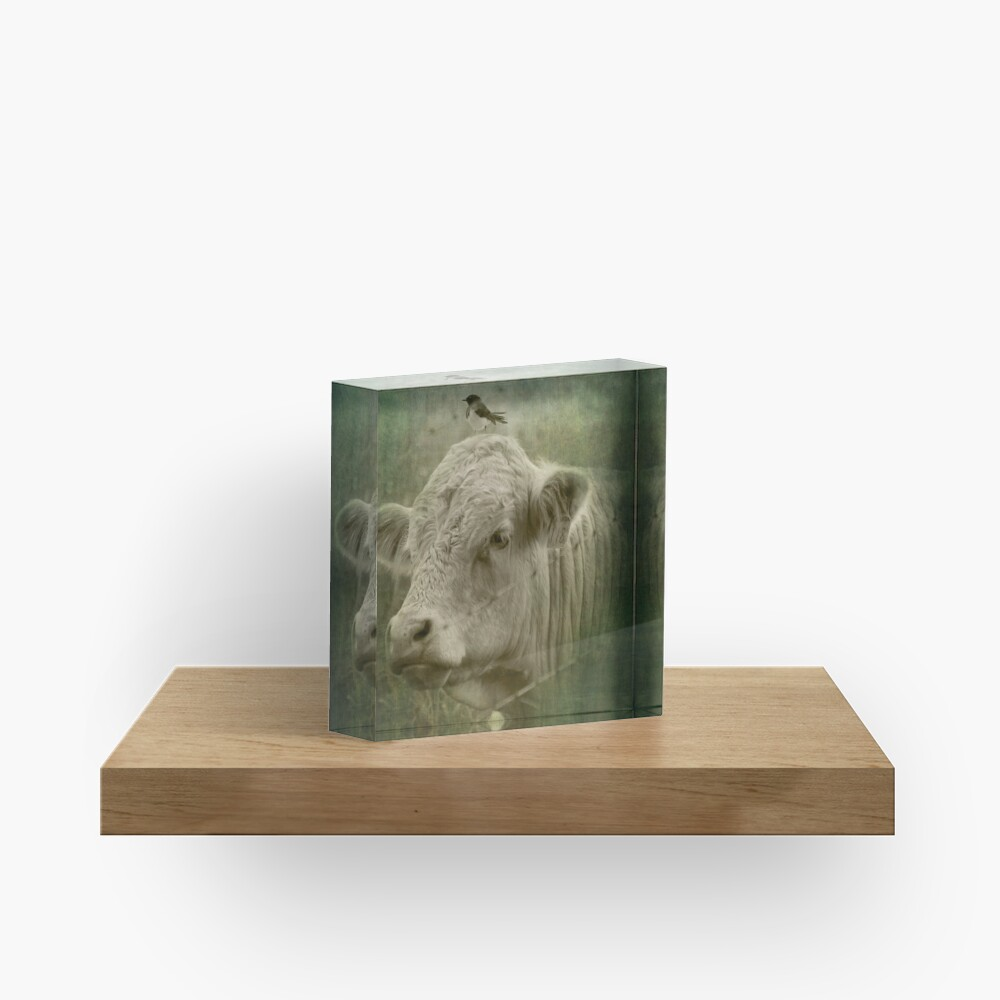 118 and his wee little mate Acrylic Block