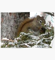 Squirrel High in a Tree Poster
