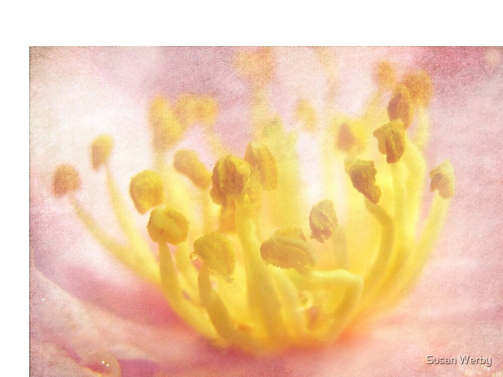 Aura of Light by Susan Werby