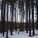 Canadian West by Ellinor Advincula