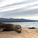 Sea Lion Vacation by Sue  Cullumber